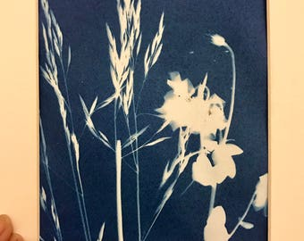 Grass and flower Riverbank Cyanotype Sunography