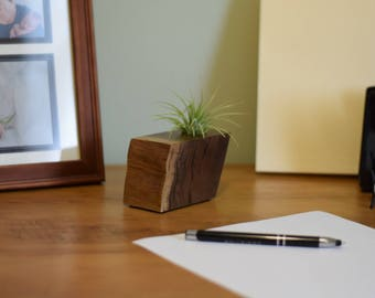 Air Plant Holder made from American Black Walnut