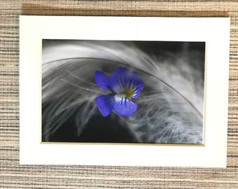 Wild Violet and Feather