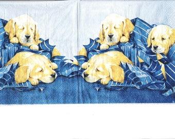 dog paper towel