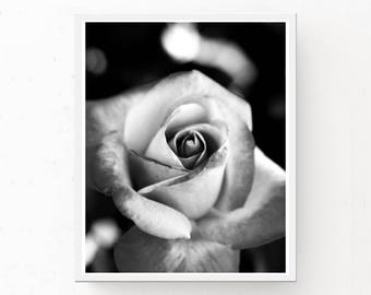 Black and White Print - French Rose, Digital Download, Printable Wall Art, French Rose Print, Printable Art, French Rose Photograph, Poster