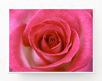 Amaranth Wall Art - Blush and Amaranth Rose, Digital Download, Printable, French Rose, Rose Closeup, Blush Wall Art, Amaranth Decor, Print