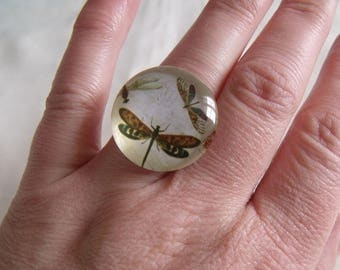 ring cabochon Dragonfly on white background