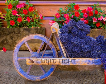 The Ever Present Cart and Lavender, on an Ancient Street in Sault, Provence, France