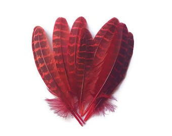 Red Zebra feathers