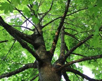 Tree Art - Nature Photography