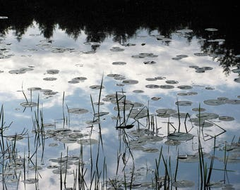 Jaime's Pond At Dusk- fine art nature photograph.
