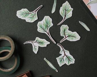 Pine Twig- Sticker Set (Transparent)