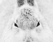 Mountain Hare Blank Greet...