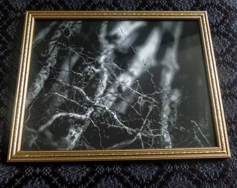 Roots | Photography | framed