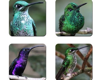 Set of 4 Hummingbirds drinks coasters featuring award winning photography by UniquePhotoArts.