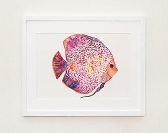 Discus Fish Illustration Print