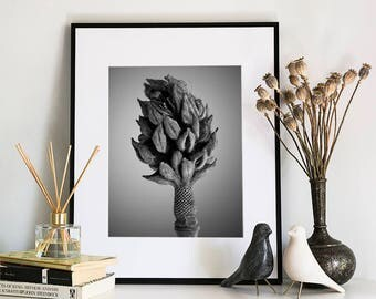Magnolia, Photographic Print, 5x7, 8x10