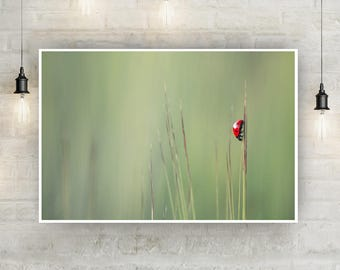 Ladybird Instant Download Wall Art Print, Colour Photography, Wildlife Photography, Home, Happy, Insect