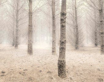 Tree photography, Winter trees, Foggy forest print, Background photo, Landscape photography, fog photo, Wall art, Printable art, download