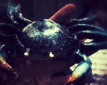 "Magical Crab Print  5""x7"""