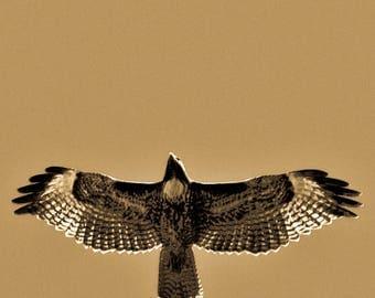 Red Tail Hawk sepia tone