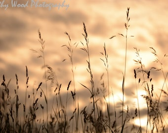 Wild Grass Sunset by Kathy Wood