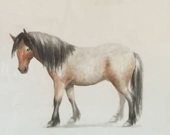 Ricky, the neglected yet indomitable pony