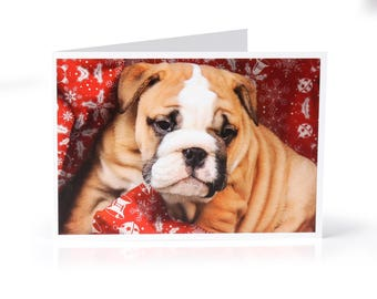 Limited Edition Bulldog Christmas Card: Puppy with wrapping paper