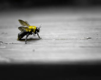 Black and White Bee Photo