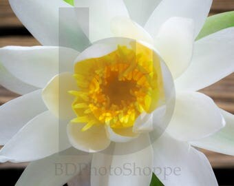 Water Lilly on Wood | Nature Photo Art | Nature Lover Gift | Fine Art Photography | Personalization | BDPhotoShoppe | Home Office Decor