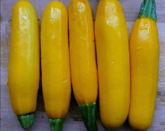 Thai Yellow Zucchini or Yellow Courgette vegetable seeds, Cucurbita pepo 2g or @ 12 seeds