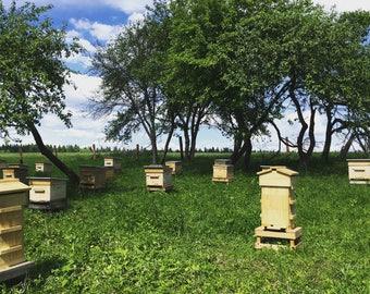 Apiary (bees farm)