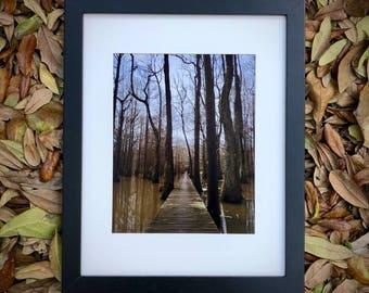 Bridge over Cypress Swamp