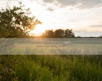 Farmer's Field Summer Digital Background