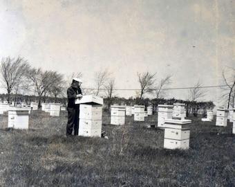 vintage photo 1940s Beekeeper Bee Hive Apiarist in his Field