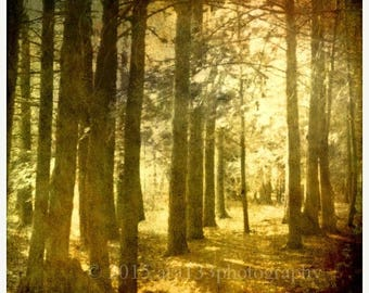 50% OFF SALE Woodland Nature Photograph, Surreal Forest, Trees, Yellow, Gold, Black, Mist, Fog, Sun, 8x8 inch fine art photograph print, Iin
