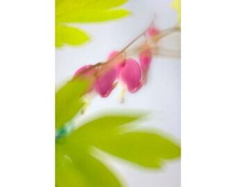 Bleeding Heart Art, Floral Art Print, Pink Chartreuse Wall Decor, Flower Photography
