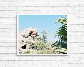 BUY 2 GET 1 FREE Palm Springs California, Dinosaur Photo, Kids Room Decor, California Wall Art, Palm Tree Photo - Palm Springs Dino 7
