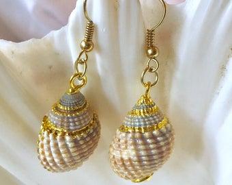 Gold Trimmed White Spiral Shell Earrings