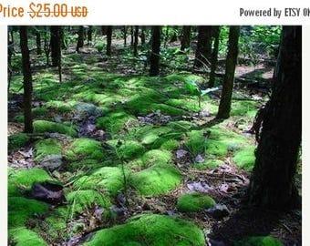 Save25% Terrarium Moss-Woodland Pillow Moss-Organic Pillow Moss - Flat Gallon Bag-Terrarium Moss-Live Moss-Wedding Moss