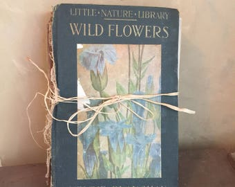 Little Nature Library Wild Flowers
