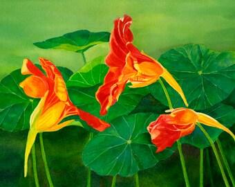Watercolor painting Orange Nasturtiums with Leaves, Floral, Original, Green Leaves