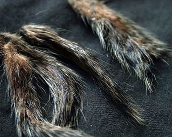 "x4 Ground Squirrel Tails: 1 1/2 - 2"", Grade A, Non-Toxic - urocitellus mollis, GST405"