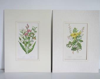 Botanical prints, botanical chromolithograph 1880