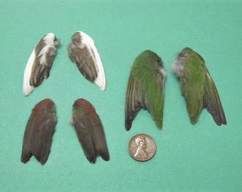 3 Pairs of Finch Dried Birds Wings Feathers Art Craft Taxidermy Various colours Shipping Included