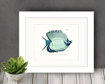 Fish Illustration - Fish of the Coral Reefs Beach Style Nautical Giclee Print Aqua Orientation Options