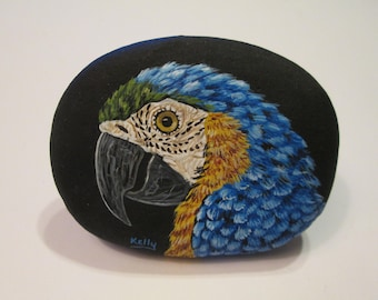 Blue & Gold Macaw hand painted on a rock by Ann Kelly
