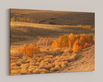California Autumn Landscape, Fall Foliage in the Eastern Sierra Mountains
