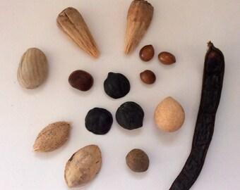 Drift seeds - Drift fruit - sample assortment - 15 Hawaiian treasures - Natural Sea Beans - Surf tumbled - Hawaiian seeds - pick the amount