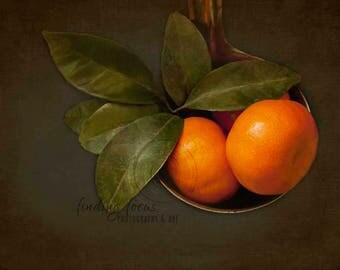 Citrus Photography, Satsumas Close-Up Still Life Print, Orange Mandarins, Gray Kitchen, Rich Green Leaves, Rustic Country Dining Room Photo