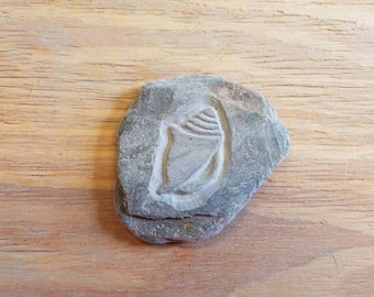 Seashell carved in flat beach stone.