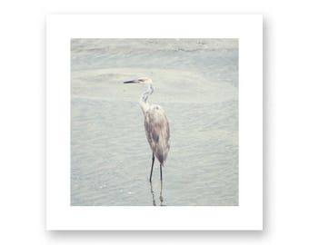 Coastal wall art, coastal art, canvas wall art, grey wall art, grey art, gray, vird wall art, bird photography, wall art canvas,contemporary
