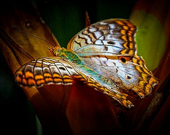Butterfly Wings),Butterfly,Ecology,Scenic,Peaceful,Tranquil,Beautiful,Colorful,Calm,Natural,Nature,Abstract