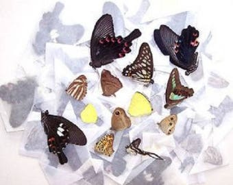 10 Butterflies Moths Wholesale Mix Lot Unmounted Wings Closed